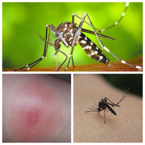 Medidas de Prevención: Mosquito Tigre